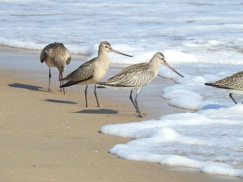 En Málaga pueden avistarse en torno a 300 tipos de aves.