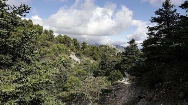 El Pleno del Senado ha aprobado definitivamente el proyecto de ley por el que se declara el Parque Nacional de la Sierra de las Nieves, en Málaga.